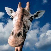 Eva Žirafa