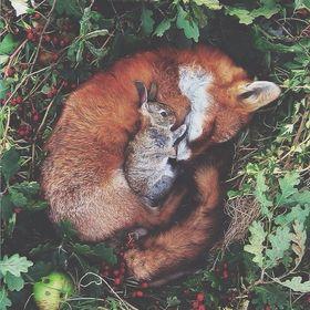 foxlistentomusic 23