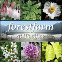 Forestfarm