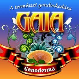 Gaia Ganoderma