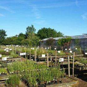 planteskole nordjylland