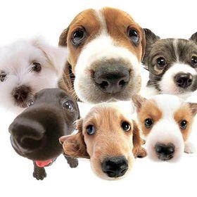 Decadent Dogs