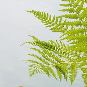 b- leaf