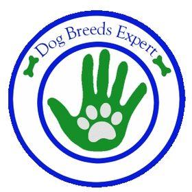 DogBreedsExpert