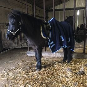 HKM Washable Fleece Lined Padded Web Horse//Pony Girth Webbing  FREE DELIVERY