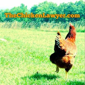 The Chicken Lawyer