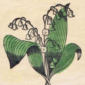 Fleur DuJardin