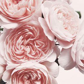 Maria Kazvan - Flowerzy Arrrrt Space