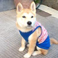 Mako Goto