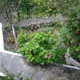 Ρουλα Βαλλιανατου
