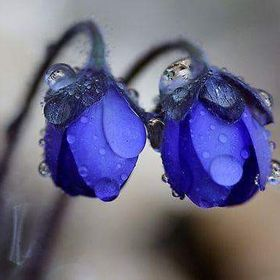 Mavi Siyah