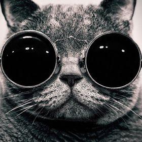Cat Crema