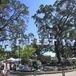 Paso Robles Olive Festival