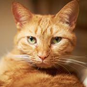 Home for cat ♥ Дом с хвостом
