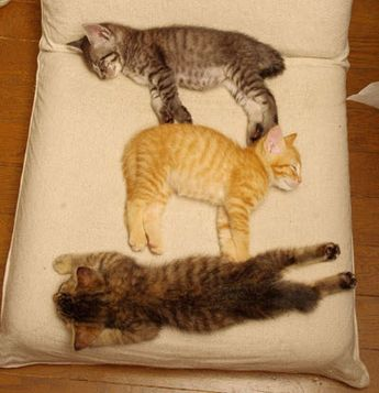 3 Kittens Out For the Count!