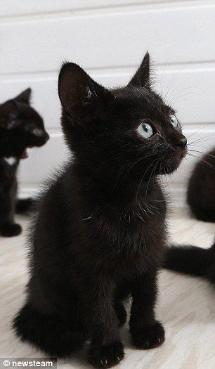 Meet the cats no one wants - just because they are black.