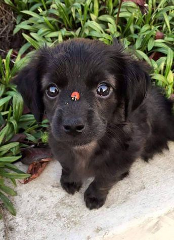 Is there something on my nose?