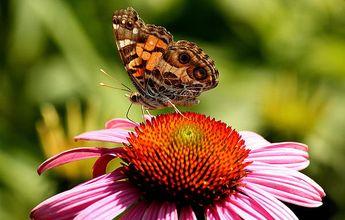 Summer Butterfly by Rosanne Jordan