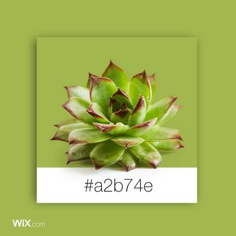 Color Palette Inspiration | Succulent Green #a2b74e