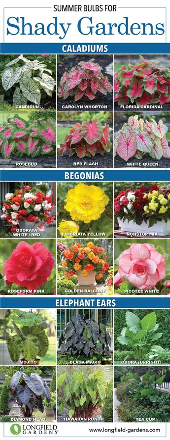 101 GARDENING SECRETS THE PROFESSIONALS NEVER TELL