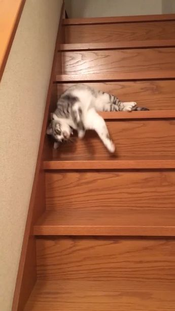 Funny Pet Gifs - Clips Of Pets Doing Funny Things - Page 20 of 23