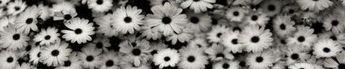 Flowers Wallpaper Tumblr Black And White 25 Super Ideas