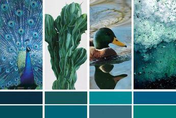 La couleur de l'année : Bleu Paon ou bleu canard