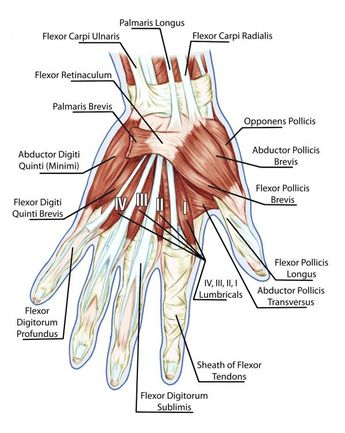 More Insight Into Developing Grip Strength: Your Hand Digits