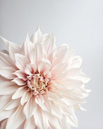 Such a very special seasonal bloom...the Cafe au Lait dahlia! Thank you so much Charmaine at @wealdblog for entering this month's…
