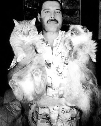 """Gefällt 14 Mal, 1 Kommentare - KEDI a.k.a. Cats in Istanbul (@kedifilm) auf Instagram: """"CAT LOVER MONDAY """"I like to be surrounded by splendid things"""". -Freddie Mercury Surround yourself…"""""""