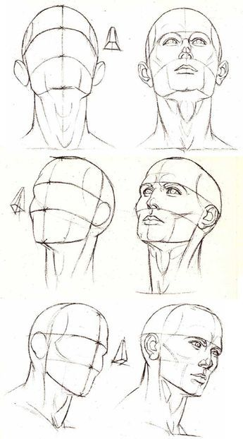 Portrait - Different angles and perspective of the head