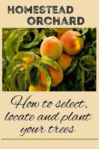 """Help in planning your homestead orchard: how to choose trees, where to put them, and how to plant them. #""""howtogardening"""""""