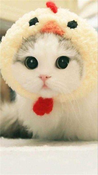 Unduh 68+  Gambar Kucing Kartun Pinterest Terbaik HD