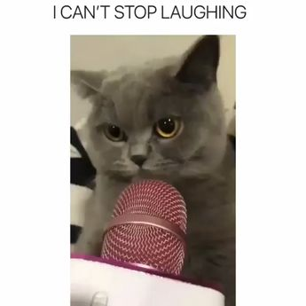 I Can't Stop Laughing, Funny Cats Videos Funny cat quotes, Images, Videos Please Re pin me. and follow me. For More. funny cat videos, cat videos, cat videos and kittens, cat videos and kittens funny, cat videos and kittens cute, cute cat videos, cute cat videos funny, cute cat videos and kittens, cute cat videos and kittens funny