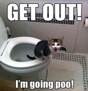Funny Animal Pictures With Captions #HowToPottyTrain