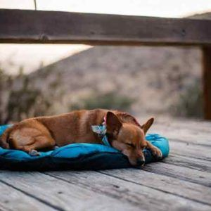 Whyld River DoggyBag Dog Sleeping Bag and Travel Bed