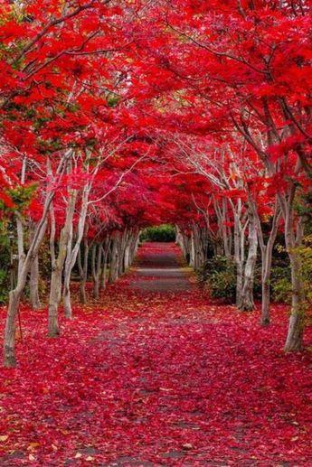 77+ Stunning Japanese Garden Ideas Plants Will Love