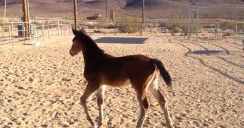 horse emma