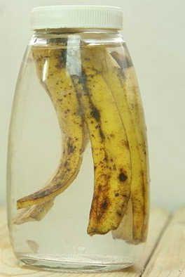 Banana Peel to Recover Your Dead Plant #plant #plant #vitaminlisu