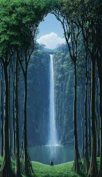 Waterfall viewed through tall trees