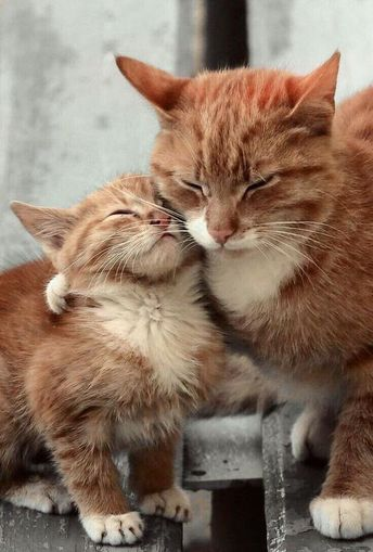 Happy Mother's Day: 7 Stories Of Amazing Mama Cats Who Saved Their Babies