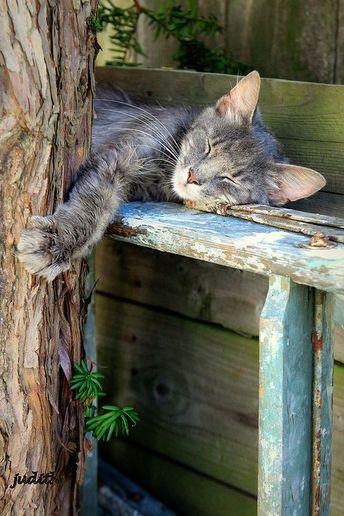 Cat - cute image