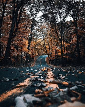The perfect autumn drive ( Photo by: @imthejam ) . . .  #creativityfound #pursuepretty #dowhatyoulove #earthofficial #discoverglobe #global_hotshotz #moonlight #ig_mood #creativelife #nightphotography #theworldshotz #visualoflife #sunsetsniper #createcommune #creative #natgeolandscape #bestvacations #bloodmoon #nature_lovers #bestcaptureglobal #artsyheaven #visualscollective #vsualambassadors #photooftheday #communityfirst #mextures