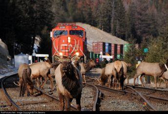 RailPictures.Net Photo: CN 5720 Canadian National Railway EMD SD75I at Jasper, Alberta, Canada by Tim Stevens