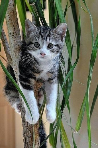 #Kitten #Cats #Animals #Cute #Adorable
