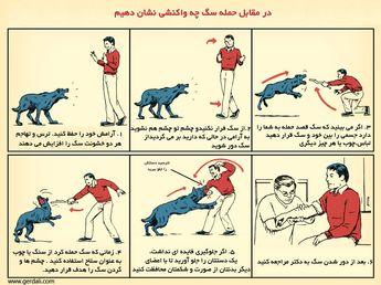در برابر حمله سگ چه واکنشی نشان دهیم - گردالی