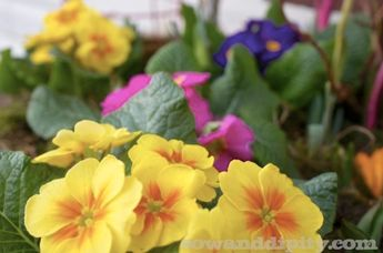 Forgot to Plant Those Spring Bulbs? It's Not Too Late!