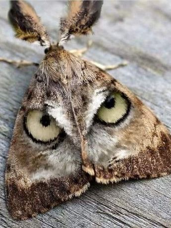 Wow! What camouflage nature gave to a simple moth! God's creations are not limited to the big and small.