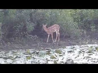 Deer On The River Bank - YouTube