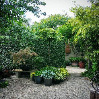 """Camilla Knekta on Instagram: """"Hej onsdag! Kanske bästa tiden på året som den här onsdagen är. Vill hålla fast dig, går ju inte!  #sommaronsdagar #trädgård #garden…"""""""